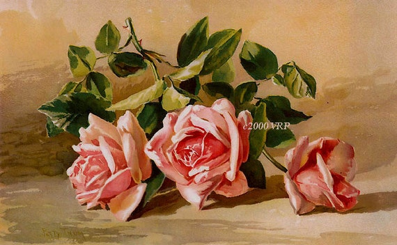 PRINT FREE SHIP Pastel Pink Victorian Cabbage Roses Patty Thum Half Yard Long