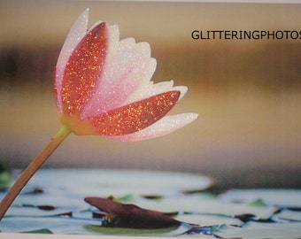Blooming, Water Lily, Fine Art, Photography, Print, Glossy, OOAK