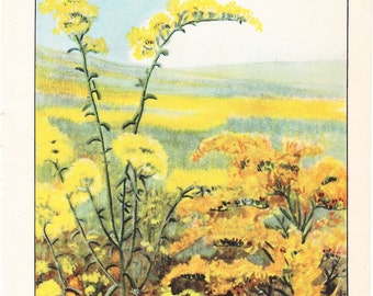 1926 Flower Print - Golden Rod - Vintage Home Decor Botany Art Illustration for Nature Science Woman Great for Framing