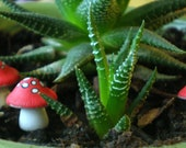 Little red and white mushrooms for terrariums or potted plants.