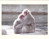 Monkey Cuddles Photo Note Cards - Set of TEN