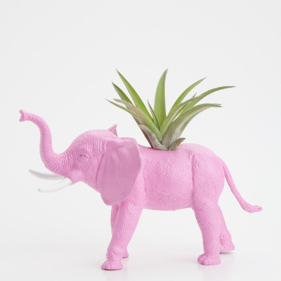 Elephant Planter with Air Plant Room Decor, College Dorm Ornament, Plants and Edibles