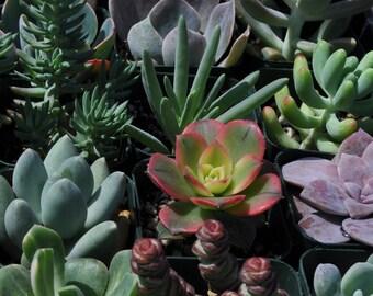 40 Wedding Favor Succulent Plants Centerpieces Decorations Flowers Gifts Bouquets