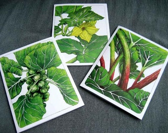 Set of Garden Edibles cards - squash blossom, rhubarb, Brussels sprouts