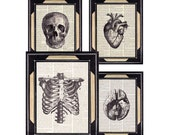 Dictionary print HUMAN ANATOMY art prints anatomical Skull HEART Brain Ribcage medical science doctor office black white text book page 8x10