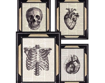 HUMAN ANATOMY art prints vintage anatomical skull heart brain ribcage medical science doctor 8x10 black white instant collection