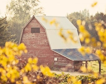 The Farm - Fine Art Photograph - rustic vintage style red barn home decor photo with yellow leaves