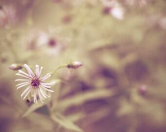 Delicate - 8 x 10 Fine Art Photograph - lavendar pink purple green nostalgic garden flower photography