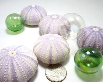 Beach Decor Urchin Shells - Nautical Decor Purple Sea Urchin Seashells,  3pc