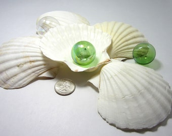 Sea Shells for Beach Decor -  Nautical Baking Scallop Shells for Display, Baking or Crafts - 6pc