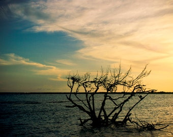 Photograph of Dark Tree Branches Pale Yellow and Blue Sky Water in Aruba's Tropical Beach Caribbean Sea Ocean Vacation Art Print Home Decor