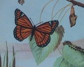 Vintage Nature Illustrations from the 1920's - Perfect for Collage and Art Journaling
