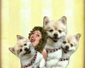 white dog, dog portrait, animal art, dog art, yellow home decor, shabby chic, happy dog, pet collage, fun pet, tagt team, pet art