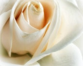 White Rose Blank Note Cards (Set of 4)