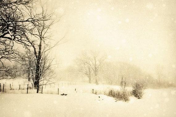 Winter Landscape Photograph - rustic  country woodland white snow barren cold stark black 8x12 Christmas scene