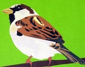 Male House Sparrow 8x10