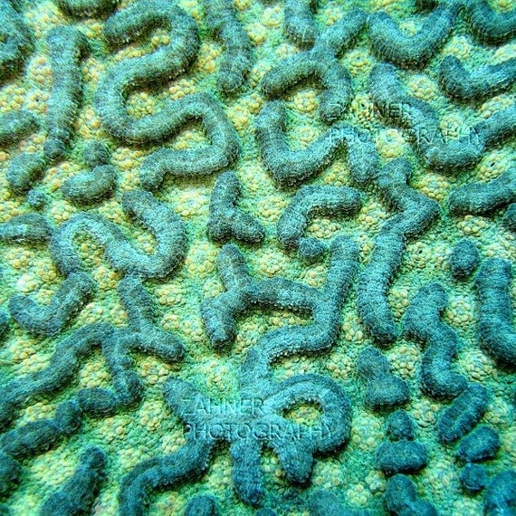 Aquamarine Coral Labyrinth - Underwater Photography Nautical Home Decor Art Print Masculine