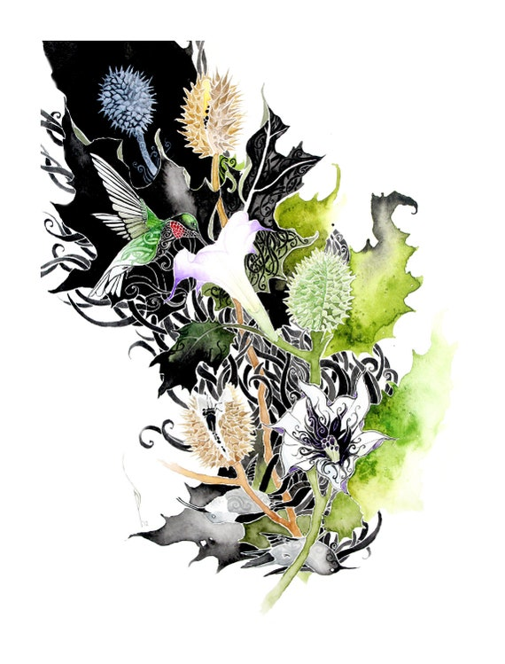 Datura - 8.5 x 11 PRINT of original watercolor