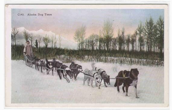 Husky Dog Sled Team Alaska 1910s postcard
