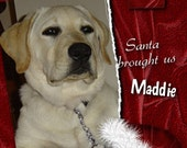 Custom Christmas photo for your new pet  Santa brought us ..