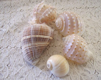 Vintage Collection of Genuine Sea Shells (5)