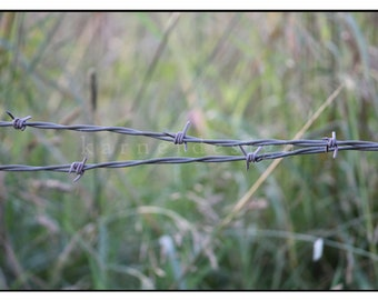 Barb Wire in a Summer Field, in Southbury, Connecticut,16 x 24, fine art photography, country living, interior design, green, grey, grass