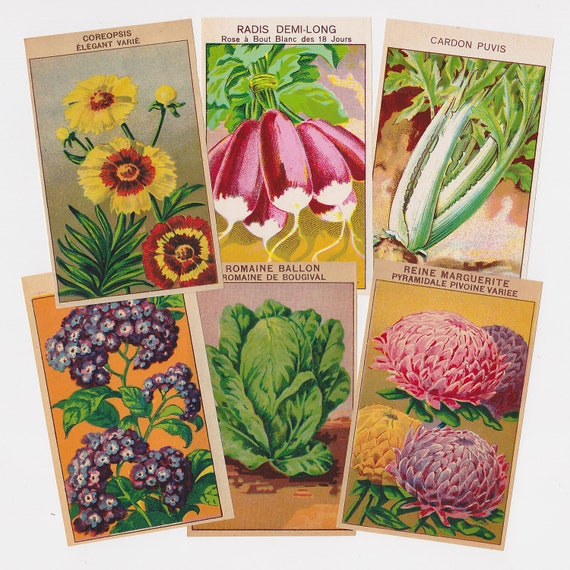 144 Vintage Seed Packet Labels French Flowers and Vegetables  All Different