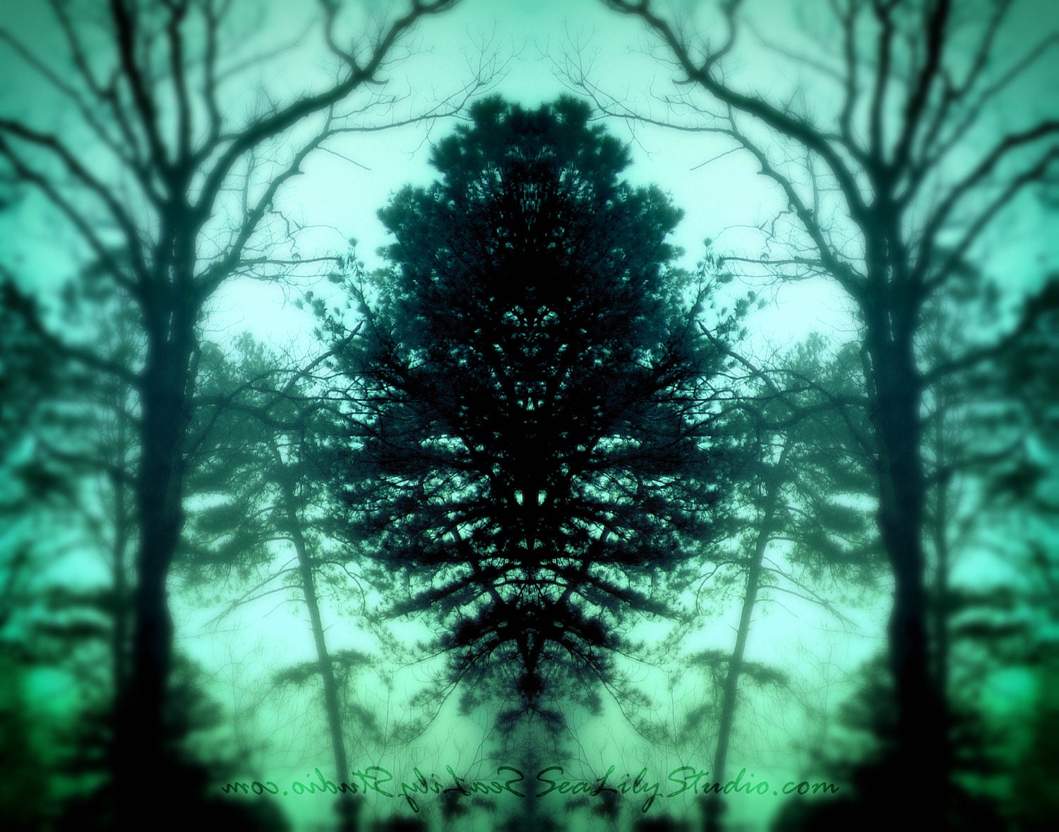 Dark Forest 11x14 surreal photo lake mist by SeaLilyStudio