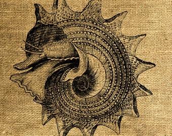 INSTANT DOWNLOAD Seashell Vintage Illustration - Download and Print - Image Transfer - Digital Sheet by Room29 - Sheet no. 657