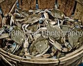 Basket of Maryland Blue Crabs - 8x12 Fine Art Print Baltimore