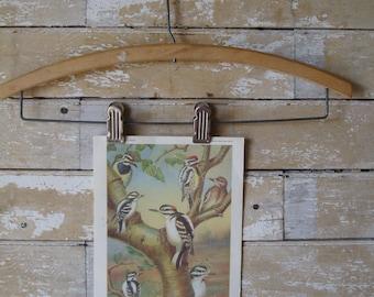 Vintage Woodpeckers Print  Artist W. J. Breckenridge 1960