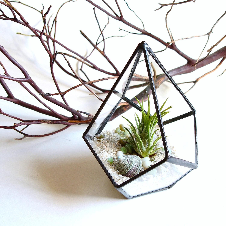 Small geometric terrarium air plant glass terrarium glass for Air plant planters