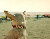 Beach Photography Dog On Beach - Venice California 1996 Gina the Chihuahua,  - Small White Chiwawa Dog Diamond Collar 10x8 inch Photograph