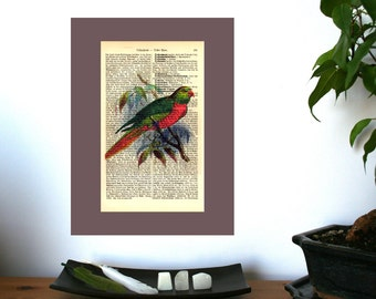 Bird No 1 Vintage Art Print on Antique 1896 Dictionary Book Page