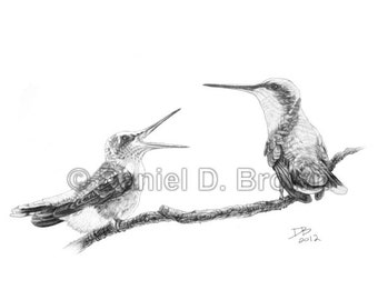 Ruby-Throated Hummingbird: Mother and Chick, Daniel D. Brown, 2012, Pencil