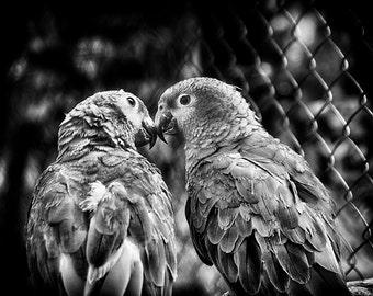 Lovebirds - Fine Art Photograph 5x7 8x10 11x14 16x20 24x30
