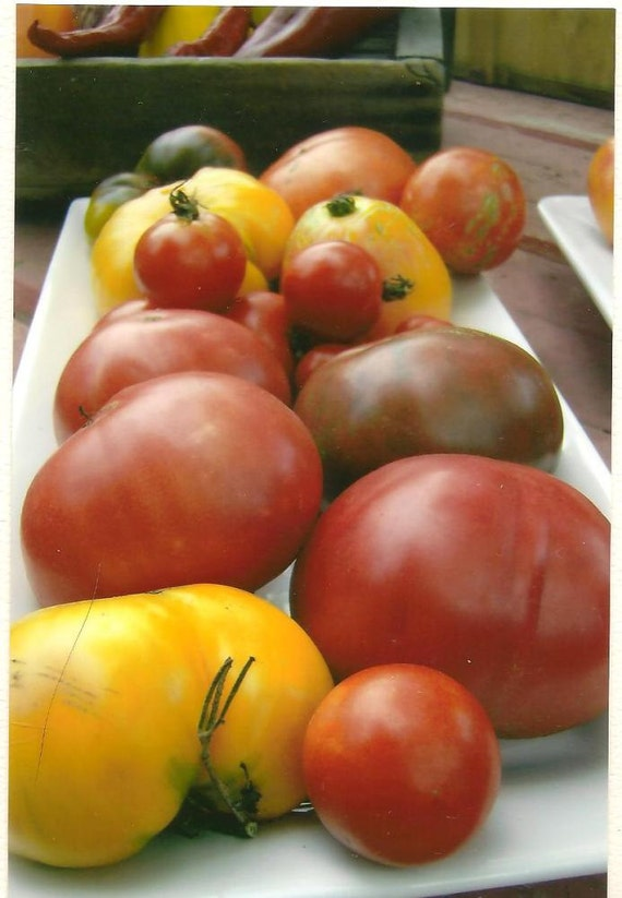 Food Photography Heirloom Tomato Platter Blank Note Card - Kitchen Art - Summer Bounty - Colorful Tomatoes B3G1F