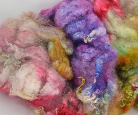 Hand Dyed Coopworth x Shetland LAMB Fleece Locks Spinning and Felting Fiber -Isabella Colorway