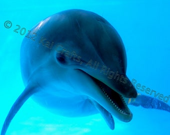 Fine Art Dolphin Photograph Signed by the Artist