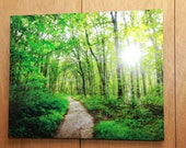 Foot trail to Chapel Falls in Michigan's Pictured Rocks National Lakeshore, a large 16  x 20 photograph printed on aluminum