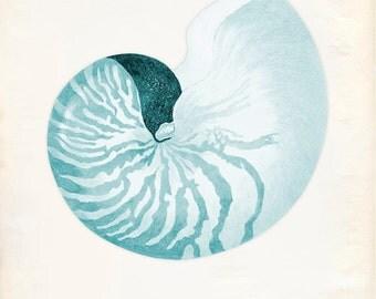 Vintage Sea Shell Nautilus Pompilius Print 8x10 P226