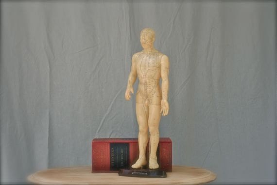 vintage acupuncture model, human male body