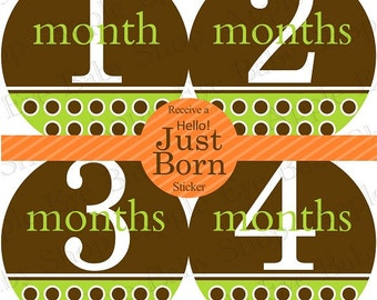 1st Year Baby Month Stickers, PLUS Just Born, Bodysuit Monthly Stickers, Baby Boy or Girl Neutral Milestone Stickers, Dots Brown Green