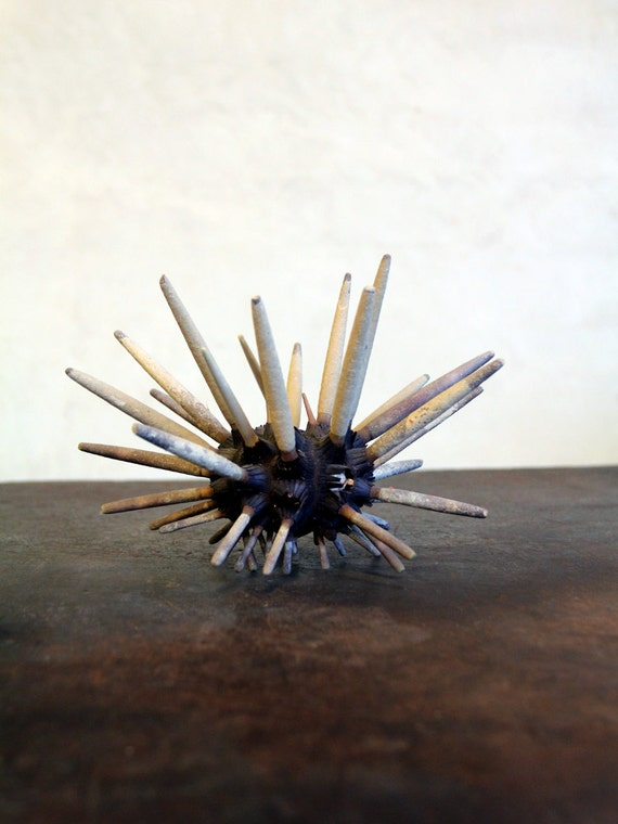 Sea Urchin / Vintage Club Sea Urchin