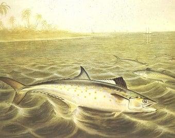 Vintage FISH PRINT 1990 Art Book Plate 106 Antique Painted in 1785 Atlantic Spanish Mackerel Beautiful FishOcean Sea Boat Ship