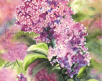 "Original Watercolor Print ""Lilac"" by Sandi McGuire"