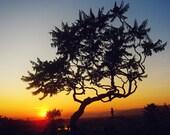 Sunset, Florence, Italy, Tree, Circle of life, Italy Photography, Florence Photograph, Travel Photography, Home Decor, Europe