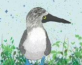 Byron the Blue Footed Booby - Fine Art Print - 8 x 10