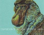 proboscis monkey, print of an original drawing