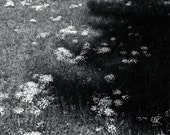 Spring , Derry, NH 1983 Black & White Landscape Photograph